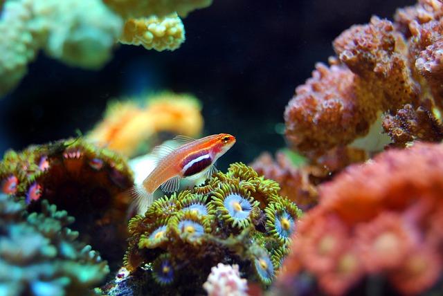 mořská rybka