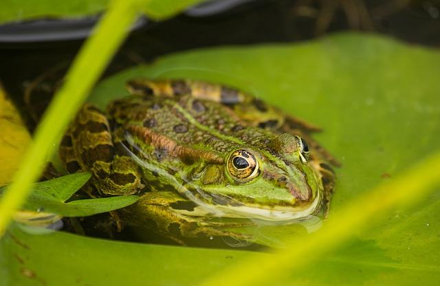 zahradní jezírko s žábou